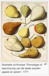Fruitherkeninngsdag