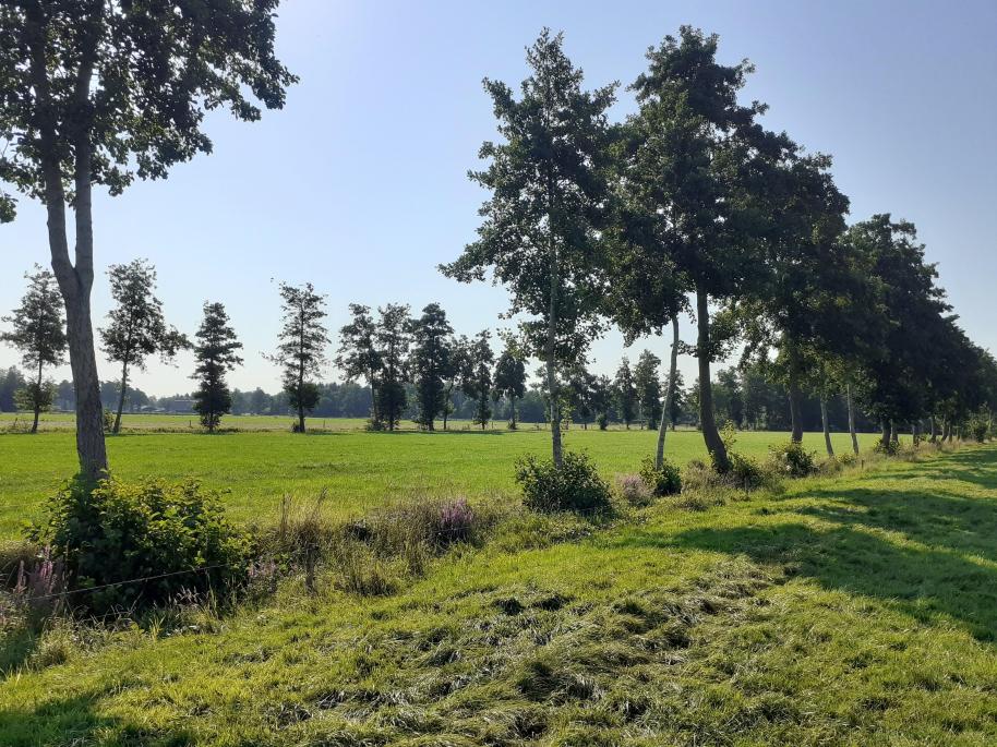 Exursies i.v.m. herstel houtsingels in het Zuidelijk Westerkwartier